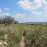 Compromís per Xàbia denuncia que la senda ha desaparegut sota les herbes